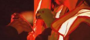 papagaio-fogo-incendio